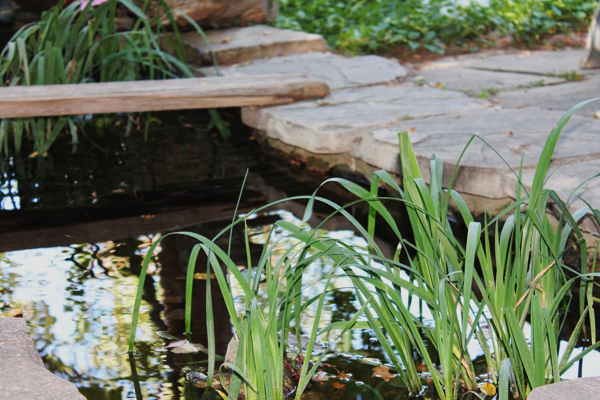 garden-pond-1045473_1920